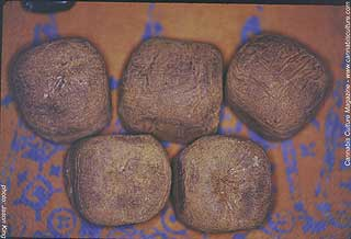 Balls of fine Moroccan hash.