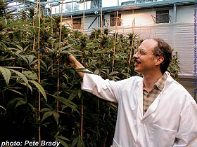 Dr Ethan Russo: `Cannabis is the most useful plant on earth.`