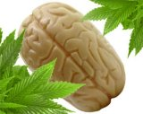 Cannabis helps protect the brain