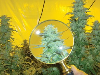 Dan V.  sent this artistic photograph of a bud and magnifying glass.