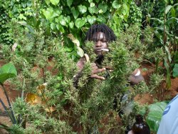 A Rasta in his veggie garden.