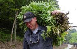 Kentucky State Trooper Trooper Mac McDonald carries a bundle of marijuana along railroad tracks near Barbourville, Ky. (Photo by Roger Alford)