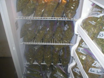 Image result for Cannabis In Freezer