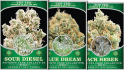 Berkeley Patient's Care Collective offers these medical cannabis trading cards.