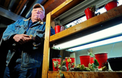 Len Gratto with his vegetable and flower grow racks where he starts his young cucumber plants in his Mission basement home on Saturday, January 08, 2011. Gratto was hit with a $5,200 grow op inspection fee. (Photog by Les Bazso)