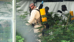 Federal agents and local authorities raid a medical marijuana operation on Monday, March 14, 2011 in Helena, Montana. (Photo by Eliza Wiley.)