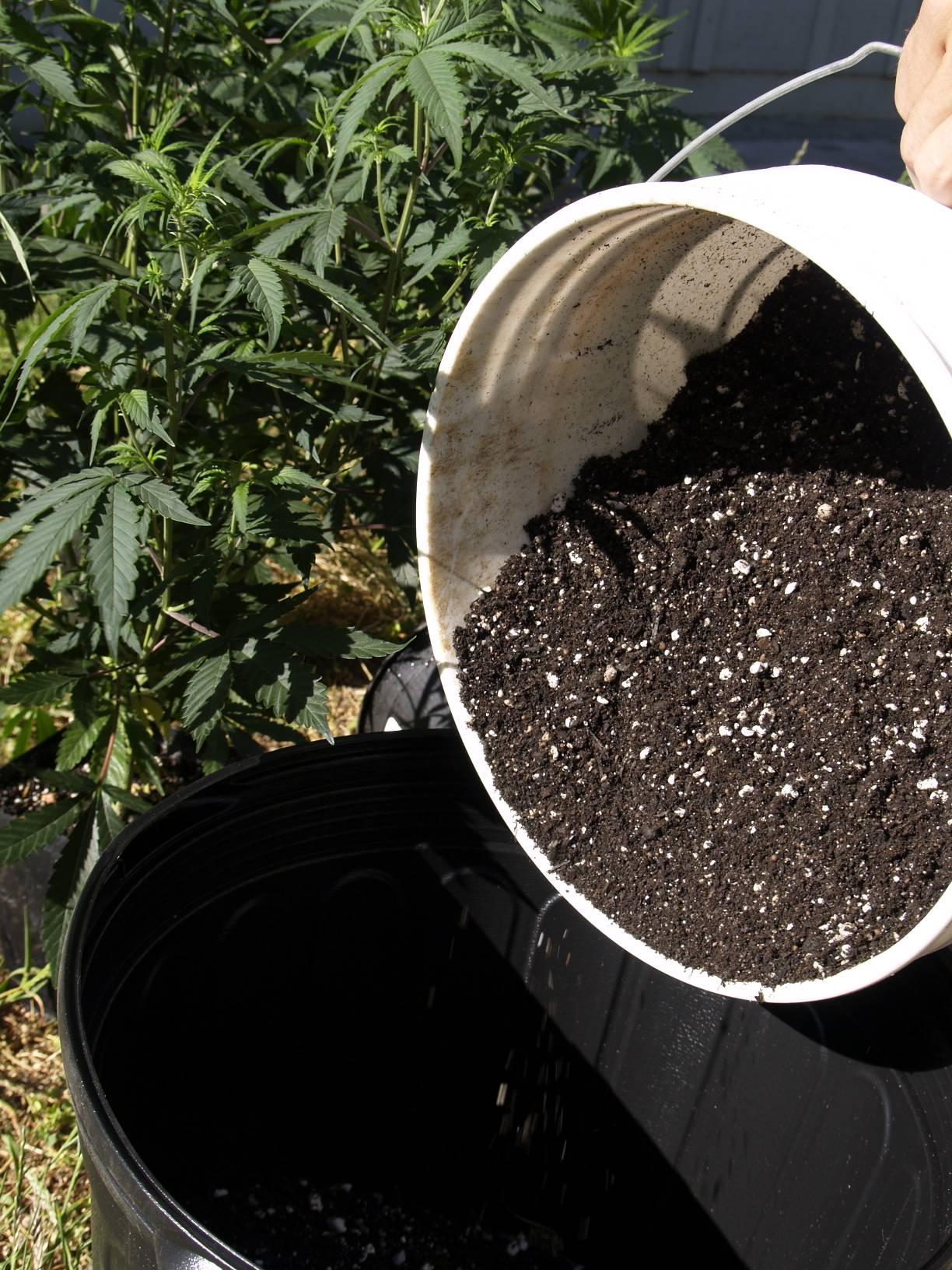 The growilla way pot tv for The soil 02joy