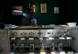 Drew Brown tends to the supply of marijuana at the Abundant Healing medical marijuana dispensary in Fort Collins, Colo., last year. Colorado is the only state that allows for-profit marijuana dispensaries, and now has some 700 statewide. (Getty Images File)