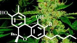 cannabinoid.jpg