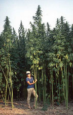 Give farmers the right to grow hemp!