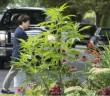 marijuana-planterjpg.jpg.size.xxlarge.letterbox