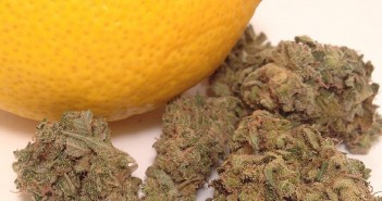 Lemon Lime marijuana