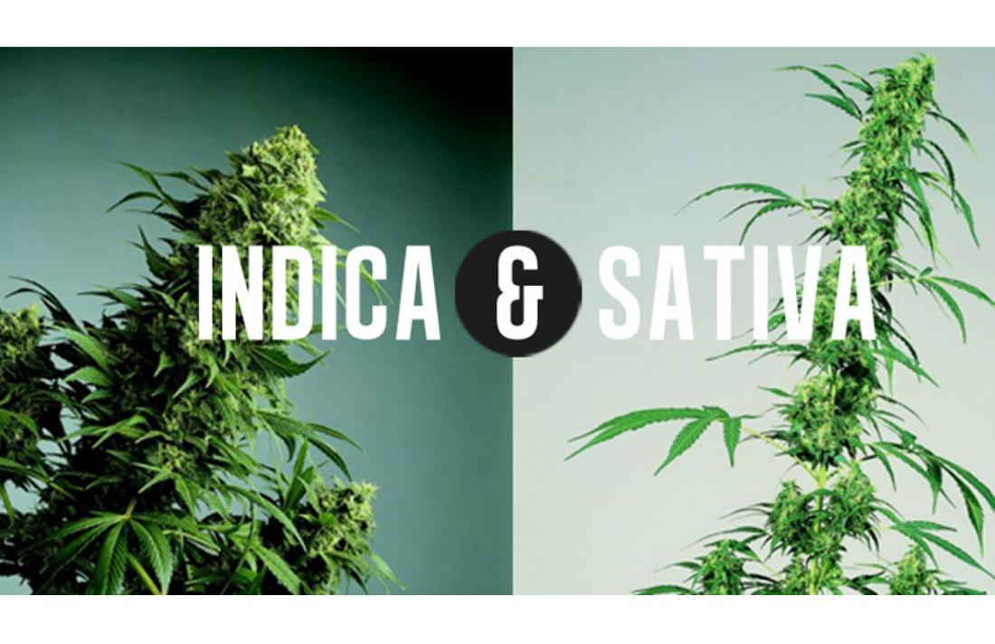 indica-vs-sativa