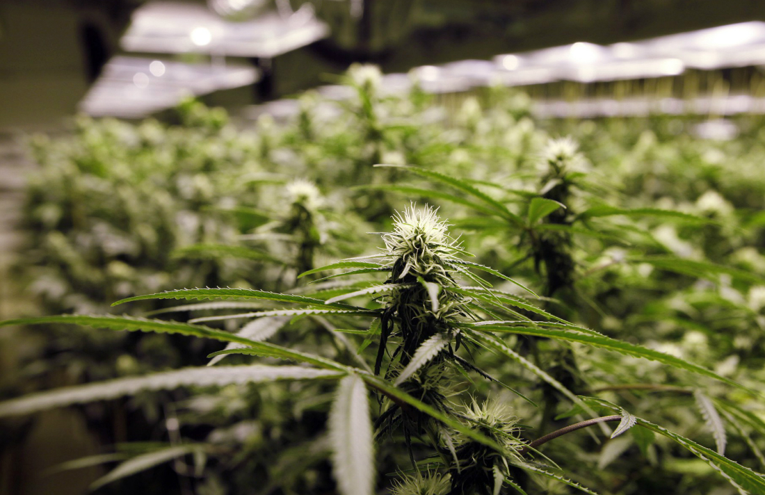 marijuana_tourism_24492443