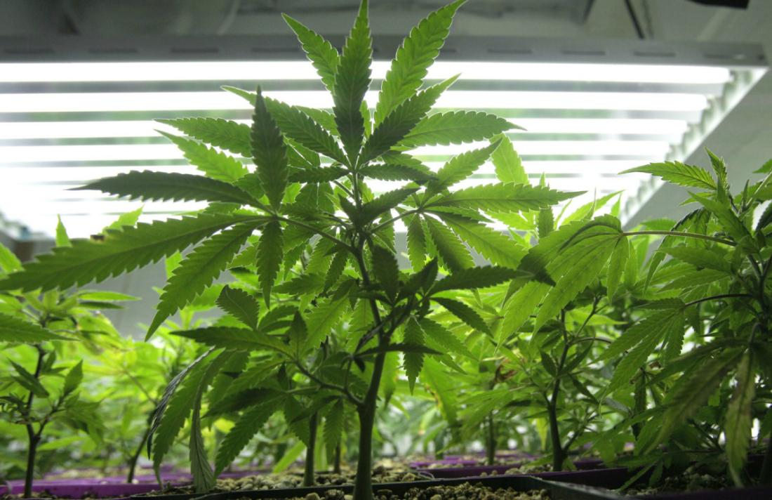 grow_op