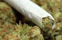 marijuana7