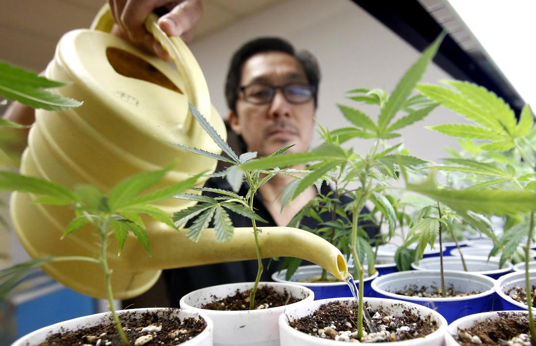 medical-marijuana-california-4d451f2d63c7d495