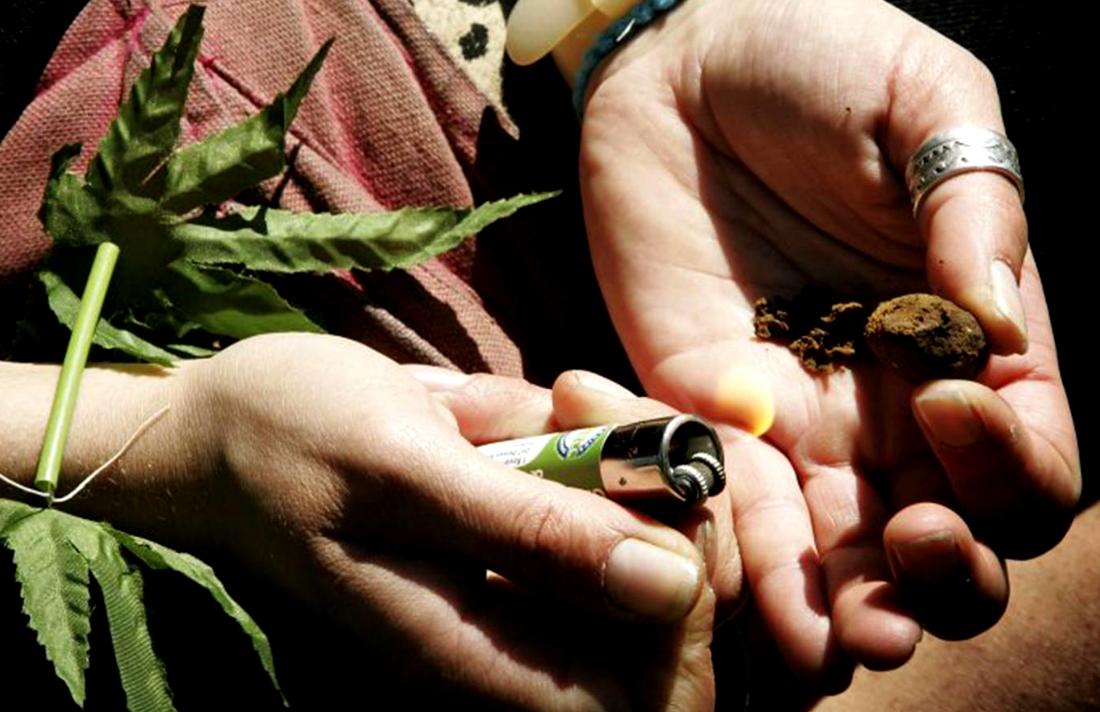 1-cannabis-plant-pa