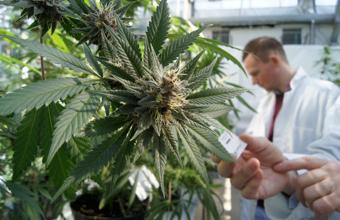 cannabis-lab-potency-test2