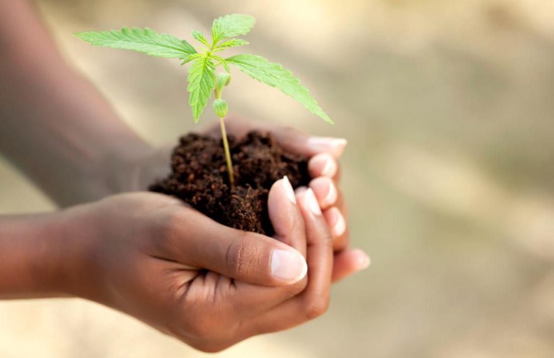 factors-that-impact-your-cannabis-strain-part-2-environment