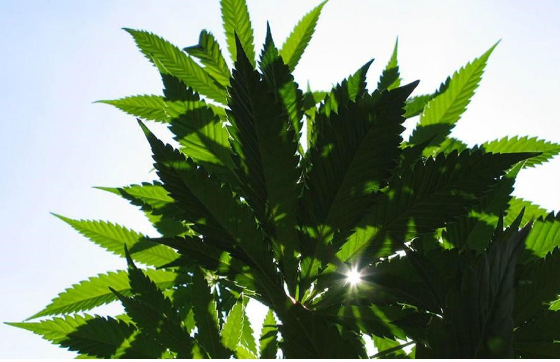 high-cbd-products-for-medical-marijuana-patients-no-access-no-pro