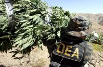 dea-marijuana
