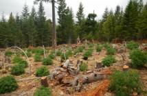 destructive-marijuana-grow