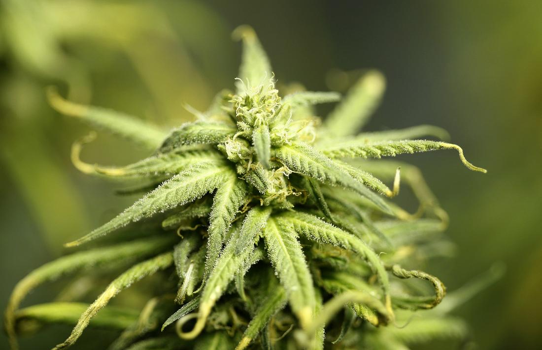 141001Marijuana
