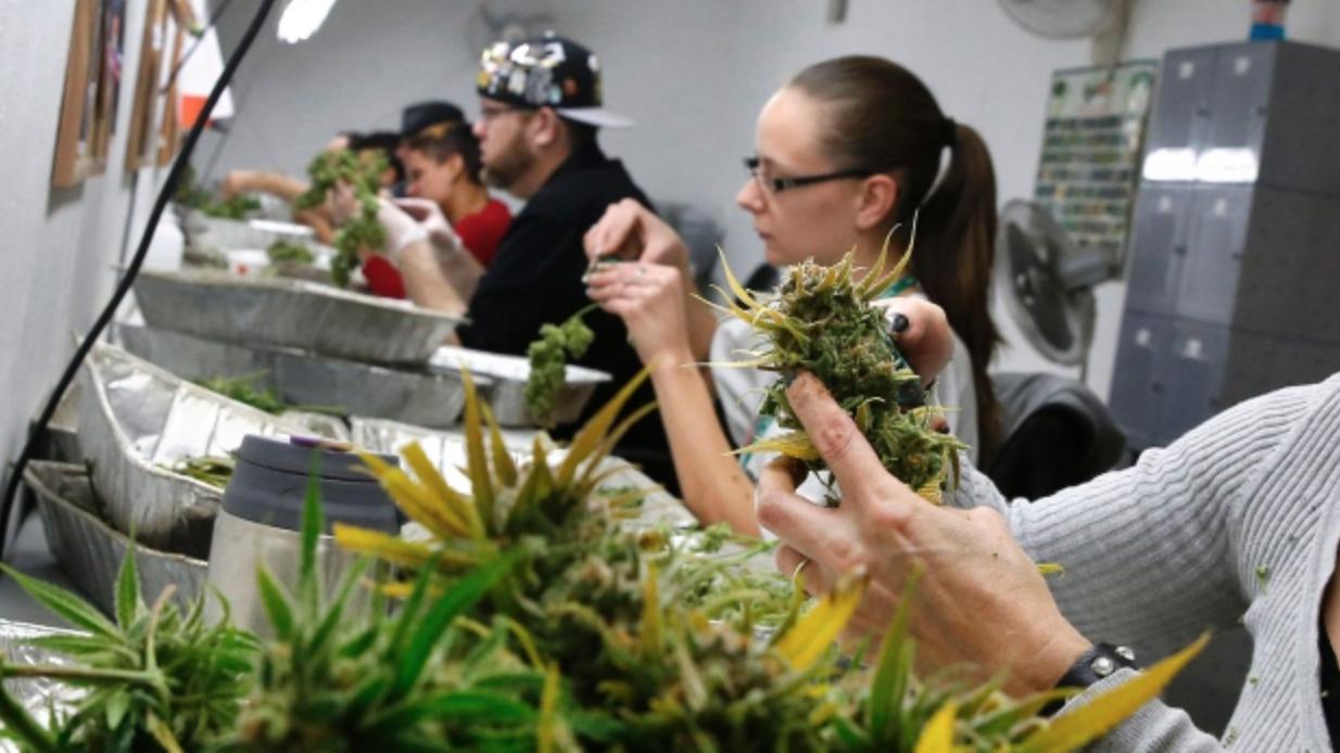 Colorado marijuana
