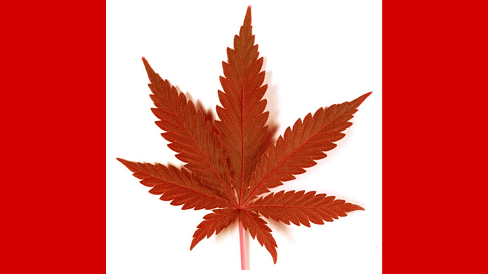 allard-canada-marijuana