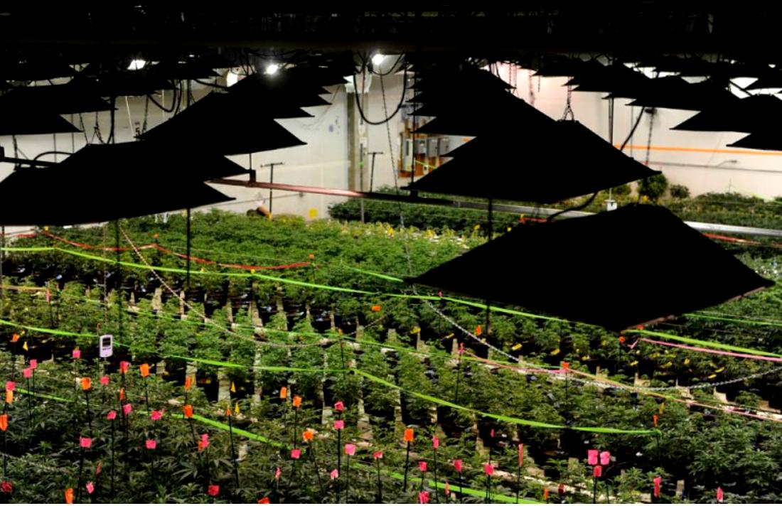 colorado-marijuana-electricity-use-energy-demand-indoor-growing-800x496