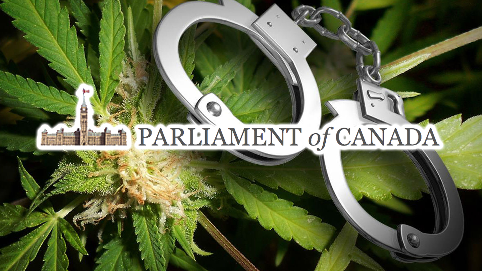 petition to stop marijuana arrests