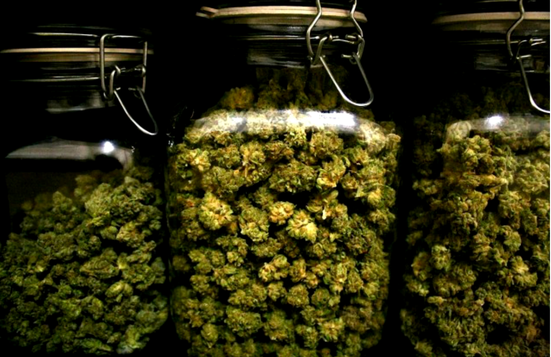 For-Great-Cannabis-Its-All-in-the-Cure-Weedist-640x426