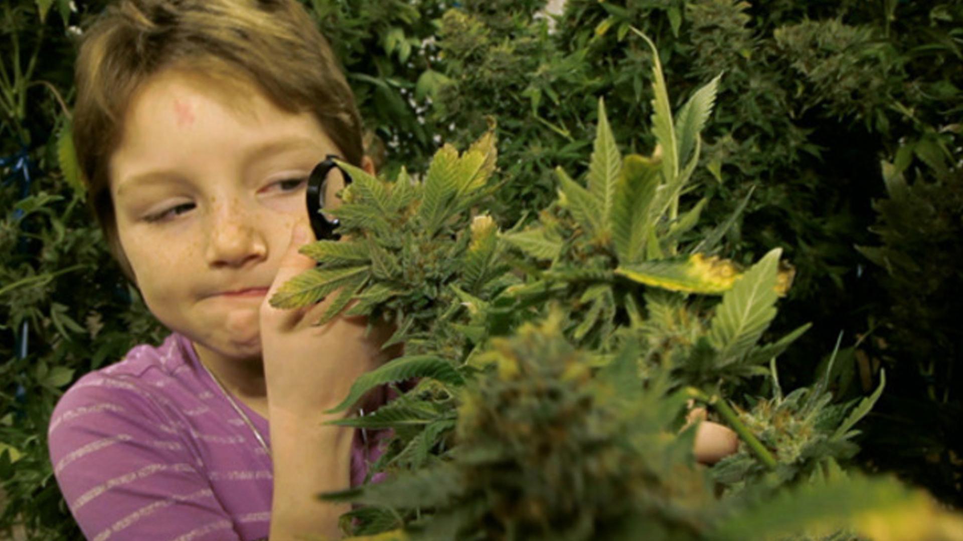 kids-cannabis