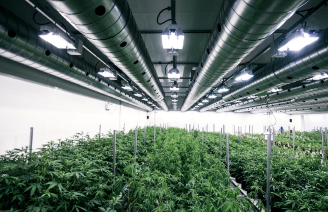 tweed-chocolate-factory-marijuana-grow-op-smiths-falls