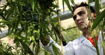 italy-cannabis