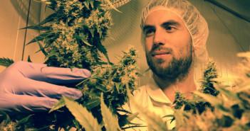 organic-pot