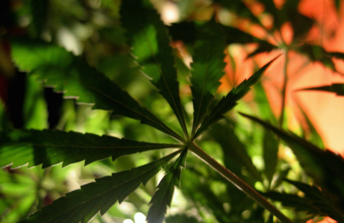 florida-medical-marijuana-access-terminally-ill-patients