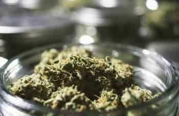 Close-Up-Marijuana-Buds-in-Gla