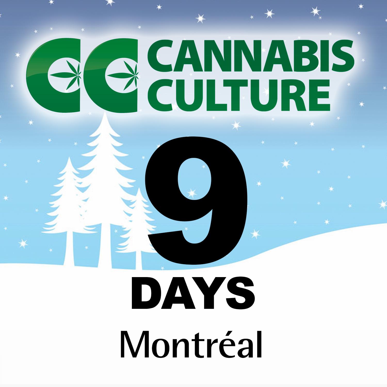 cannabis-culture-montreal-countdown