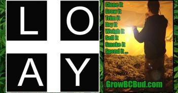 "Expert Joints LIVE! - ""Loyal To The Loud"" Loyal'T' GrowBCBud.com Mr. Green"