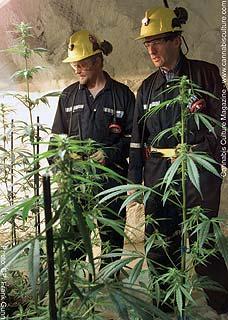 Prairie Plant founder Brent Zettl and ex-Health Minister Alan Rock.