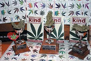 Winning strains at the Bud Lovers` Cup