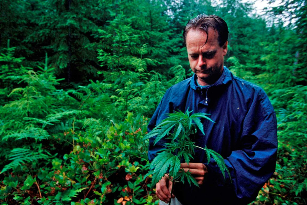 Marc Emery plant photo by Jeff V