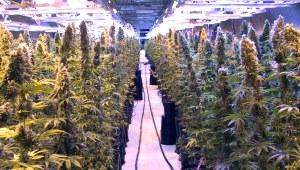 Flin Flon mine in Manitoba, where the Canadian government grows marijuana