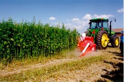 Hemp farming would be a huge industry for America