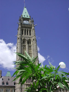 Legalize it, Canada!