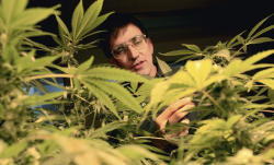 Richard Lee, of Oaksterdam University, looks at cannabis plants maintained by students in July.