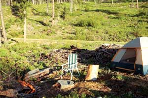 Then we camp in an area where the pine trees have been diseased by pine beetles.