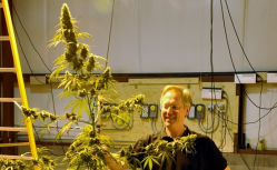 High-growth prospects: Centennial Seeds is raising $500,000 through a private offering. Above, founder Ben Holmes with a marijuana plant at the company's seed-production facility in Lafayette, Colo. (Photo by Linda Banks)